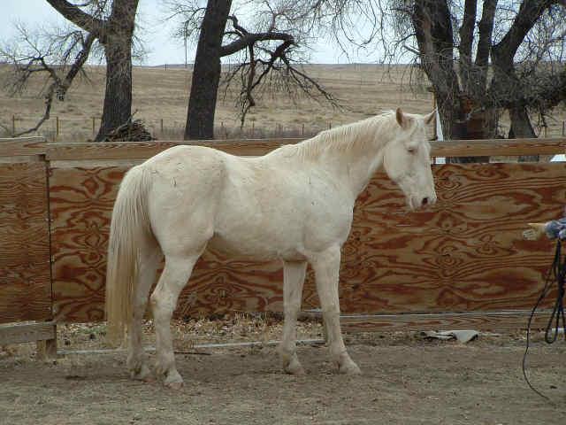 horses20005
